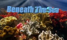 Beneath The Sea 4K