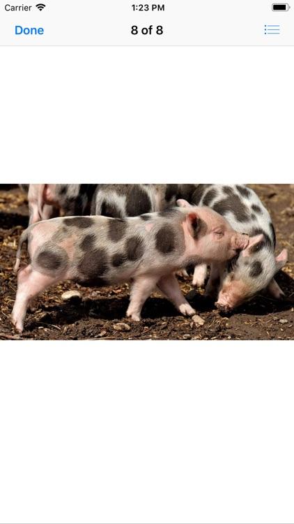 Piglet Stickers screenshot-8
