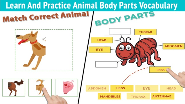 Learning Animals For Toddlers On The App Store