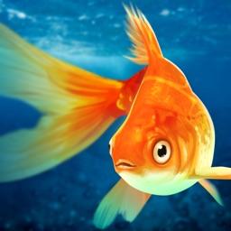 Pet Fish Tank - Goldfish Home