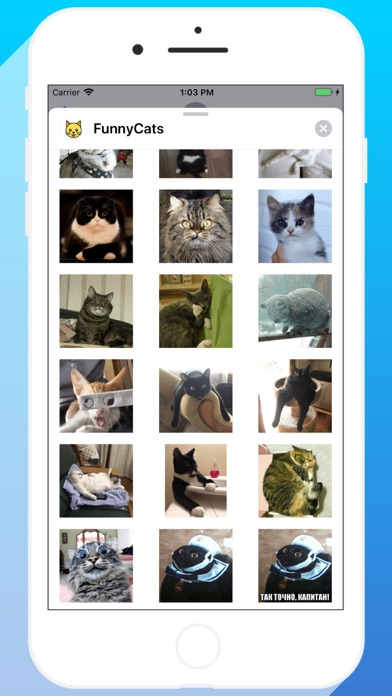 Talkitty - Cats Stickers App Download - Stickers - Android