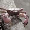 Crabhome iPhone