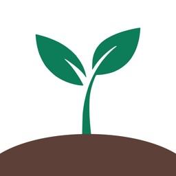 Money Tree Finance Manager