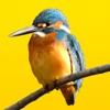 見つけた!野鳥図鑑 - iPadアプリ