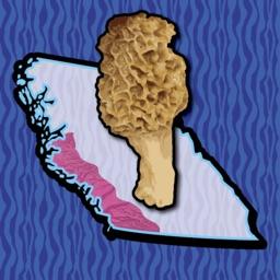 BC Coast Mushroom Forager