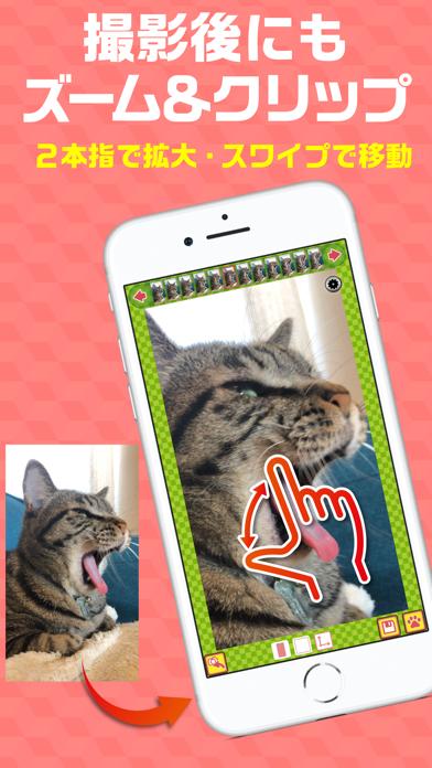 撮る猫のおすすめ画像4