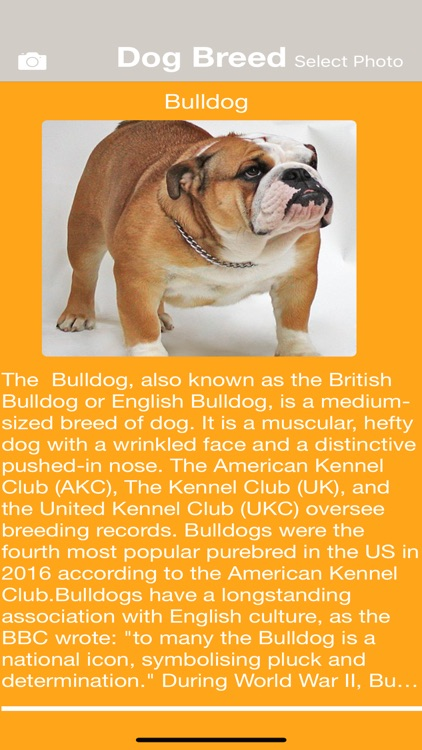 Dog Breed Identify screenshot-2