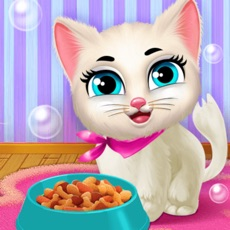 Activities of Cute Kitty Care Pet Daycare