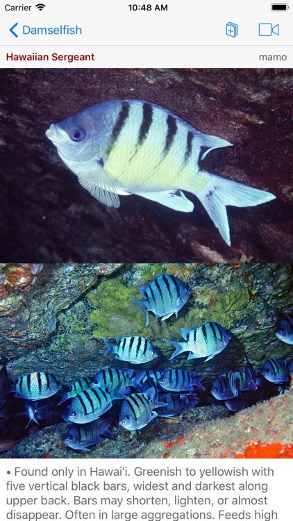 Snorkel Fish Hawaii for iPhone screenshot-5