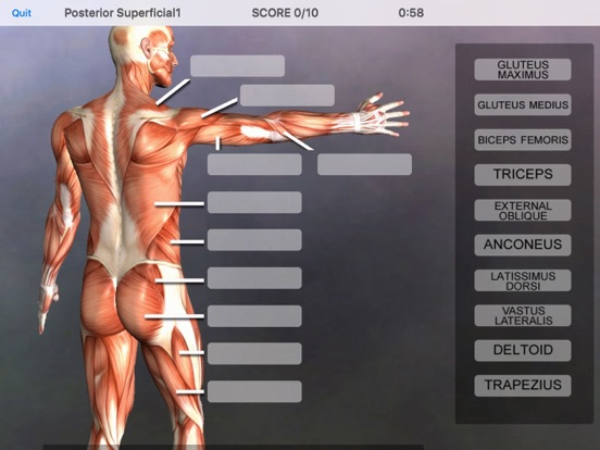 Muscle & Bone Anatomy 3Dのおすすめ画像5