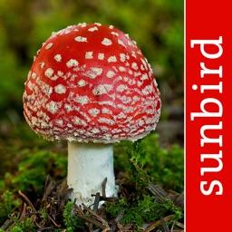 Pilze Sammeln + Bestimmen