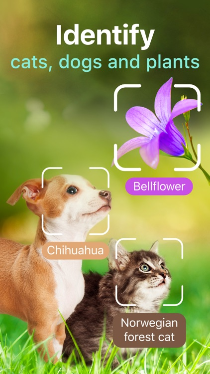 Plants, Cats & Dogs Scanner screenshot-0