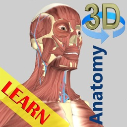 3D Anatomy Learning