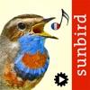 Chants d'oiseaux automatique - iPhoneアプリ