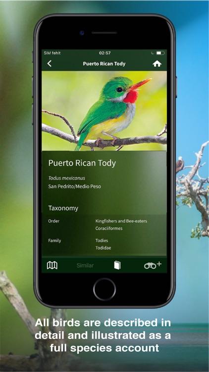 All Birds PR -> Antigua screenshot-4
