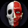 Atlas Anatomía: Cuerpo Humano - Tools Assistant