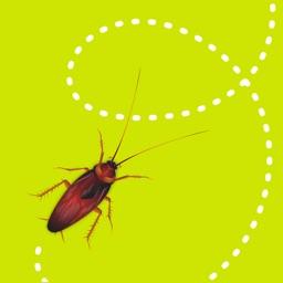 dizzy bugs
