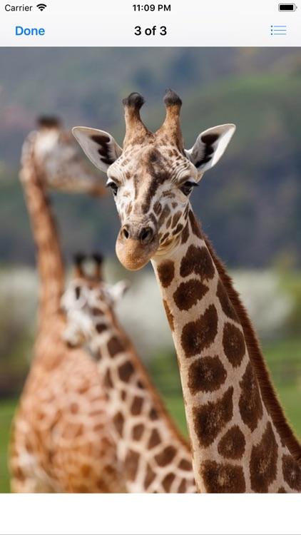 Lotsa Giraffe Stickers screenshot-4
