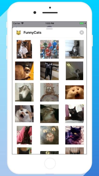 Talkitty - Cats Stickers screenshot-8