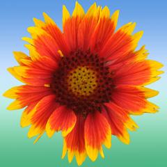 Flower Ref