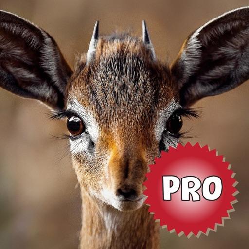 Deer Hunting Calls: Sound Pro