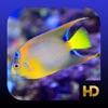 Peaceful Aquarium HD - iPhoneアプリ