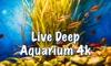 Live Deep Aquarium 4k:Deep Sea