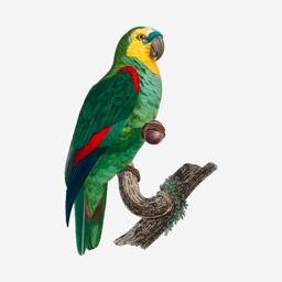 Parrot Tarot - Daily Reading