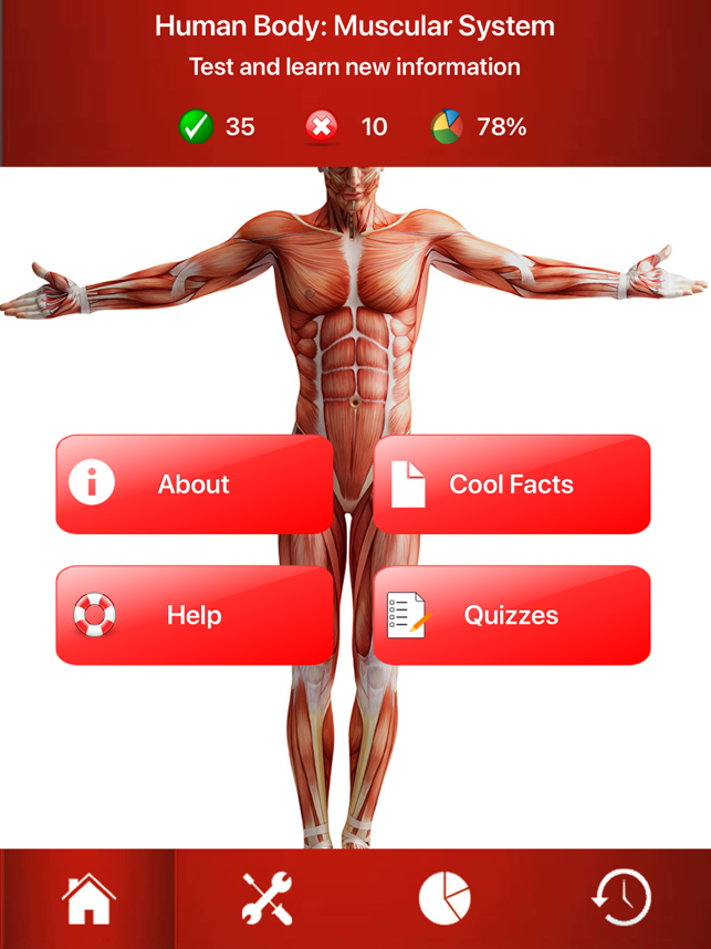 the muscular system test