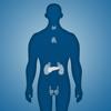 Gulsen CAKIR - Endocrine System Trivia artwork