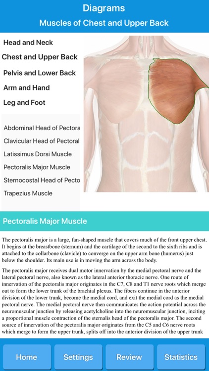 Muscle System Anatomy screenshot-5