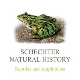 Reptiles & Amphibians of NA