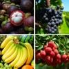 看图猜水果-荟萃各种奇花异果