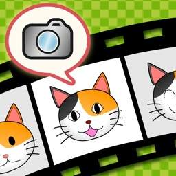 KittyCam (for cats)