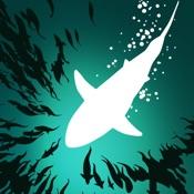 Thumbnail image for Shoal of fish