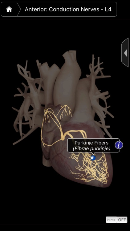 Heart Pro III - iPhone screenshot-3