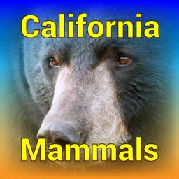 California Mammals