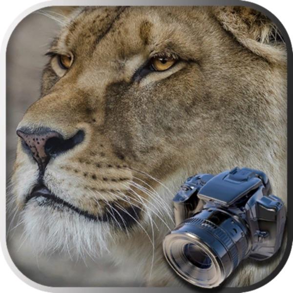 Hidden Object Safari - Animals