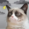 Grumpy Cat's Funny Weather - iPhoneアプリ