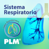 PLM Sistema Respiratorio