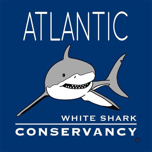 Sharktivity