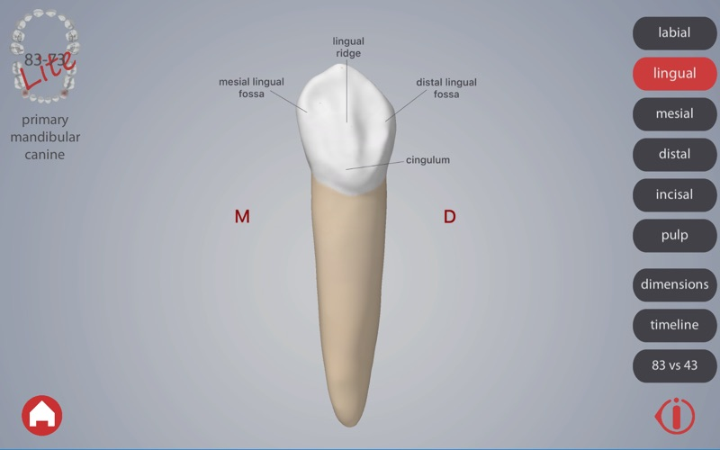 Dental Corpus Primary Lite скриншот программы 5