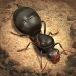 The Ants: Underground Kingdom pour pc