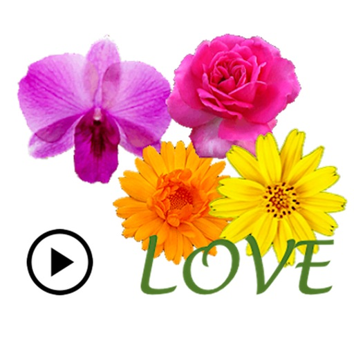 Animated Cute Flower Greetings