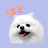 Pomeranian White Dog Stickers