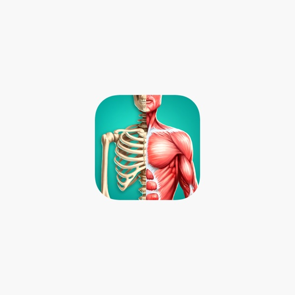 Discover Human Body Ar On The App Store