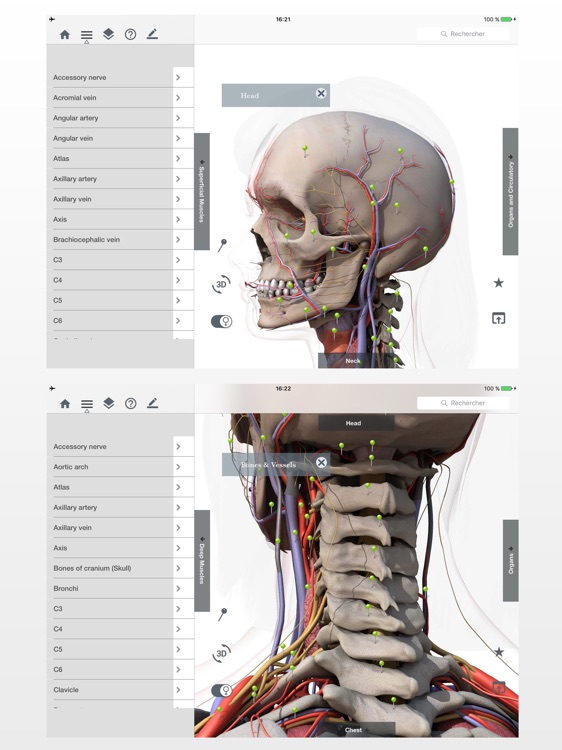 Anatomy Easy : Learn Muscles, Skeleton and Bones screenshot-1