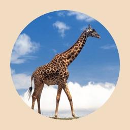 动物园里的动物叫声-专供儿童节日快乐