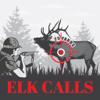Elk Hunting Calls for Big Game Hunting