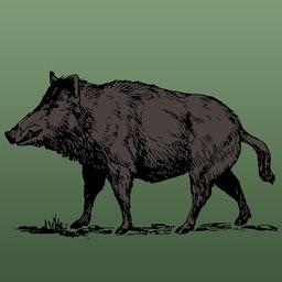 Wild Hog Sounds